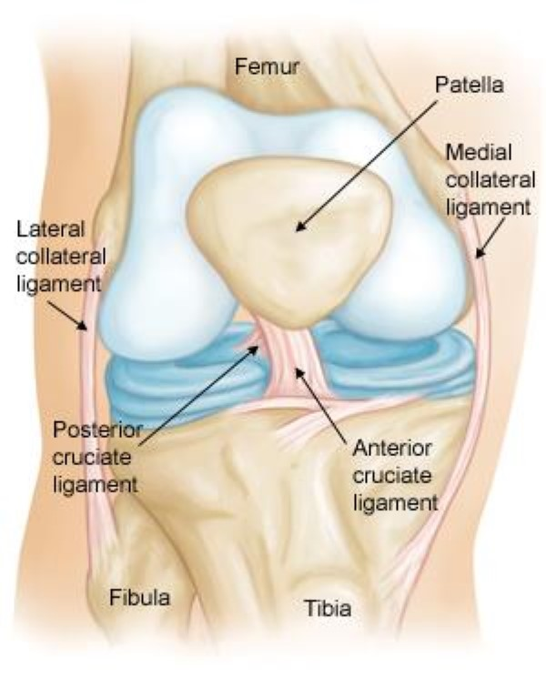 Knee Ligament Tears Orthopedics Noor Al Wasl Clinic Dubai